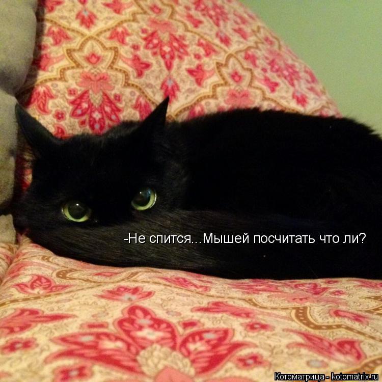 Котоматрица: -Не спится...Мышей посчитать что ли?