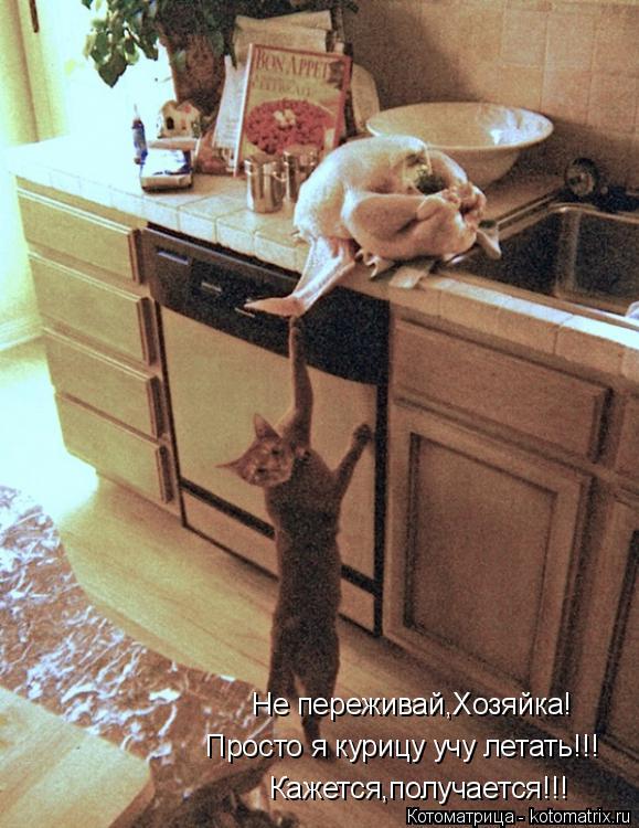 Котоматрица: Не переживай,Хозяйка! Просто я курицу учу летать!!! Кажется,получается!!!