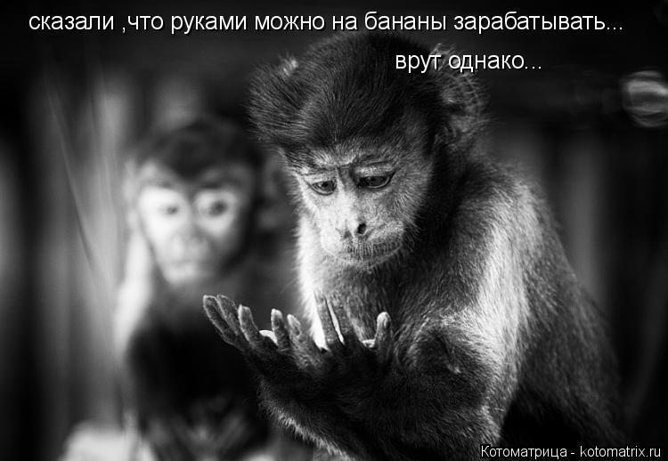 Котоматрица: сказали ,что руками можно на бананы зарабатывать... врут однако...
