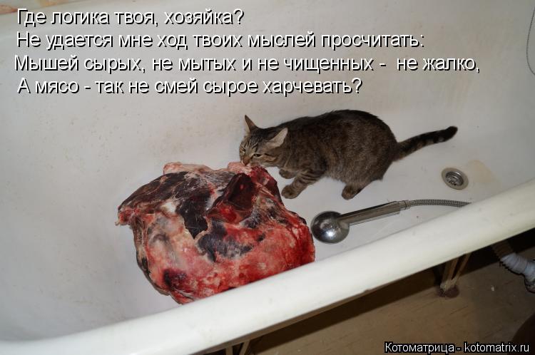 Котоматрица: Где логика твоя, хозяйка?  Не удается мне ход твоих мыслей просчитать: Мышей сырых, не мытых и не чищенных -  не жалко,  А мясо - так не смей сыро
