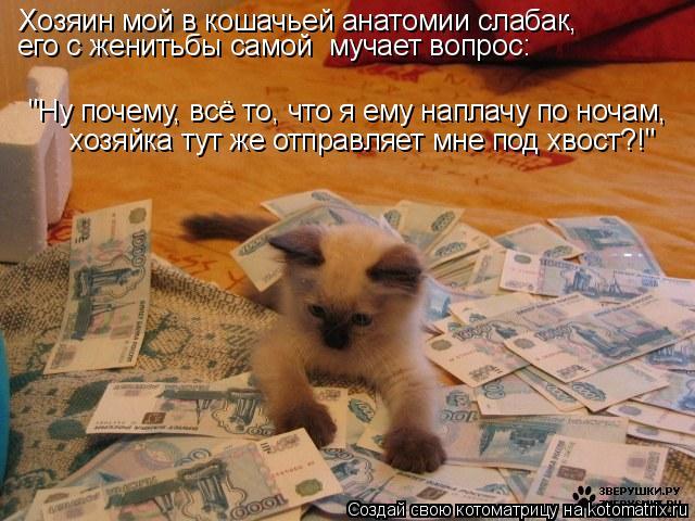 """Котоматрица: Хозяин мой в кошачьей анатомии слабак, его с женитьбы самой  мучает вопрос: """"Ну почему, всё то, что я ему наплачу по ночам, хозяйка тут же отпр"""