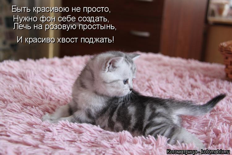 Котоматрица: Быть красивою не просто, Нужно фон себе создать, Лечь на розовую простынь, И красиво хвост поджать!