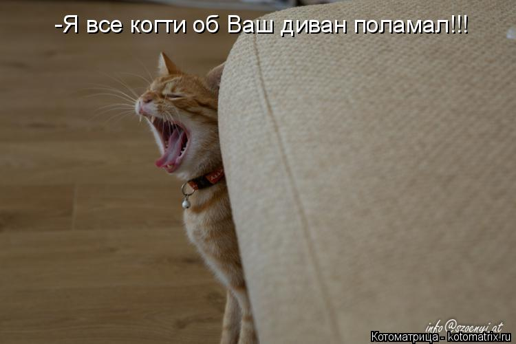 Котоматрица: -Я все когти об Ваш диван поламал!!!