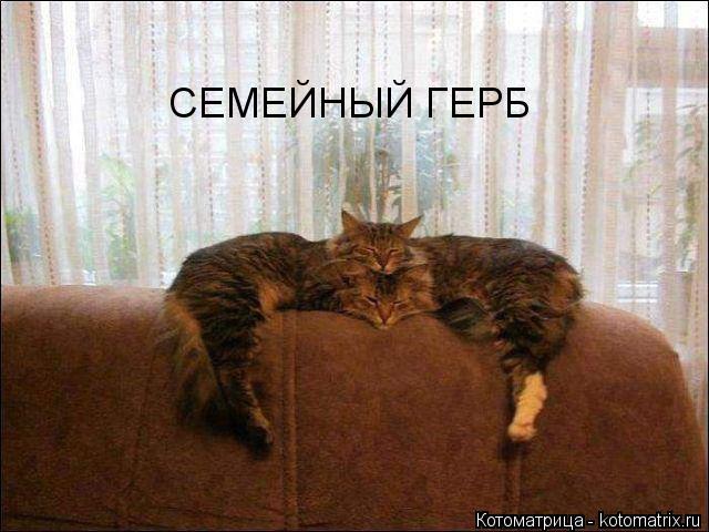 http://kotomatrix.ru/images/lolz/2015/01/20/kotomatritsa_h2.jpg