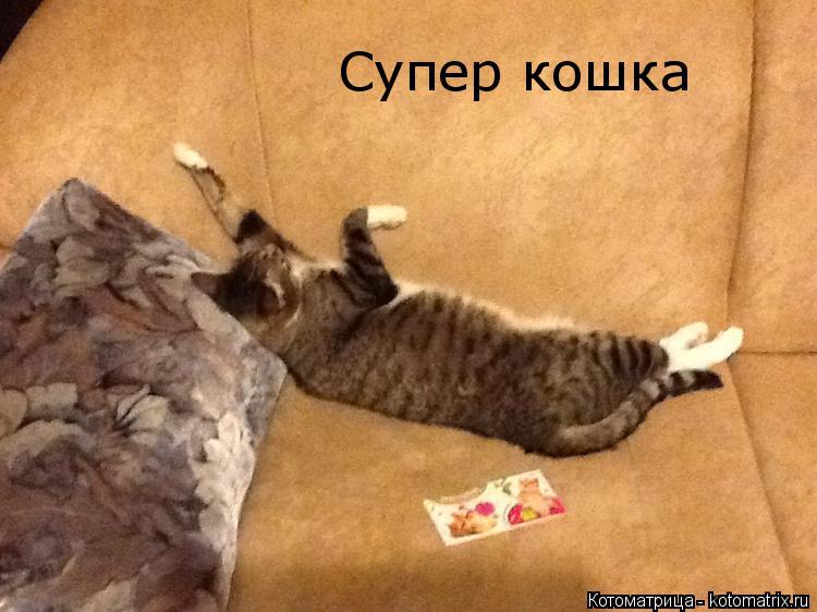 Котоматрица: Супер кошка