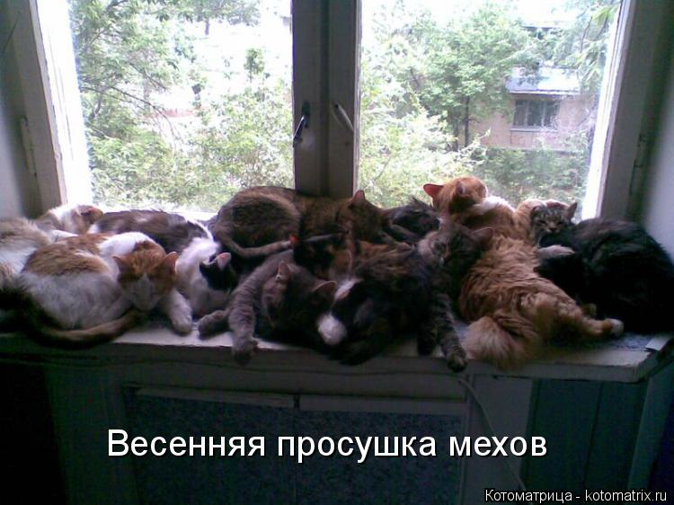 http://kotomatrix.ru/images/lolz/2015/01/21/kotomatritsa_4.jpg
