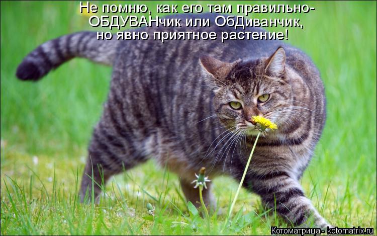 Котоматрица: Не помню, как его там правильно- ОБДУВАНчик или ОбДиванчик, но явно приятное растение!