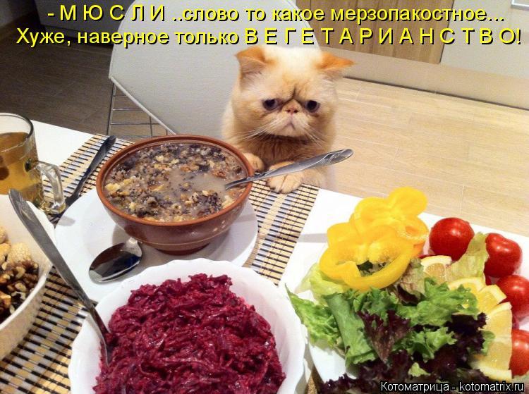 http://kotomatrix.ru/images/lolz/2015/01/21/kotomatritsa_sm.jpg
