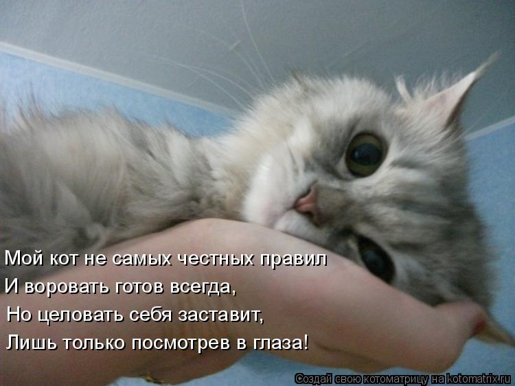 Котоматрица: Мой кот не самых честных правил И воровать готов всегда, Но целовать себя заставит, Лишь только посмотрев в глаза!