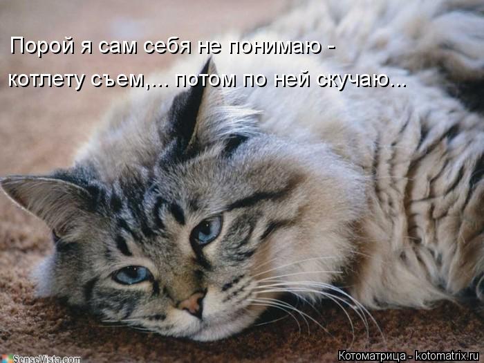 Котоматрица: Порой я сам себя не понимаю - котлету съем,... потом по ней скучаю...
