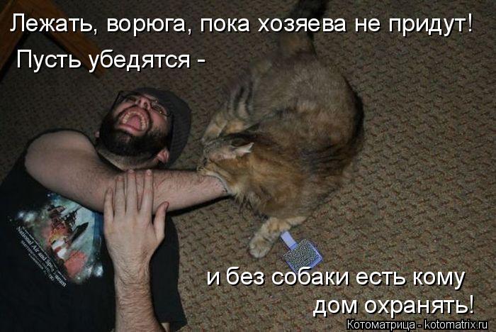 Котоматрица: Лежать, ворюга, пока хозяева не придут! Пусть убедятся -  и без собаки есть кому дом охранять!
