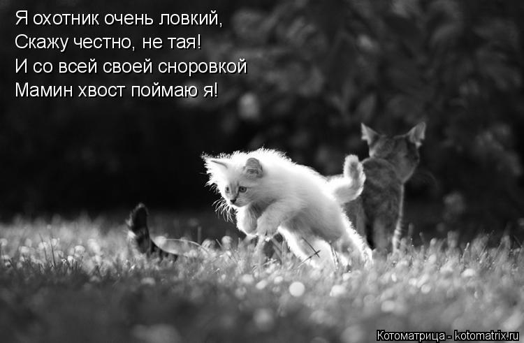 Котоматрица: Я охотник очень ловкий, Скажу честно, не тая! Мамин хвост поймаю я! И со всей своей сноровкой