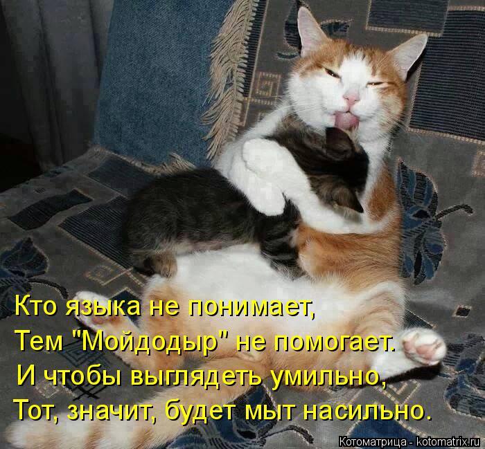 """Котоматрица: Кто языка не понимает, Тем """"Мойдодыр"""" не помогает. И чтобы выглядеть умильно, Тот, значит, будет мыт насильно."""