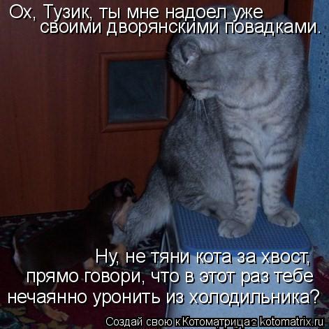 Котоматрица: Ох, Тузик, ты мне надоел уже своими дворянскими повадками.  Ну, не тяни кота за хвост,  прямо говори, что в этот раз тебе нечаянно уронить из хо