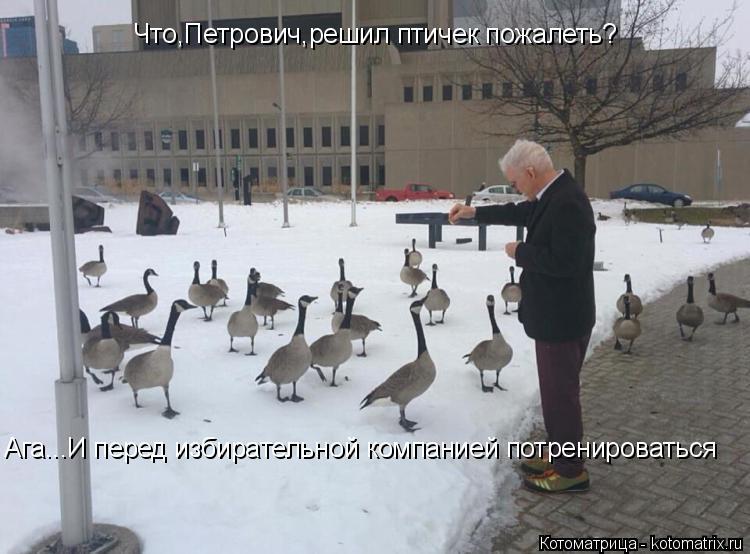 Котоматрица: Что,Петрович,решил птичек пожалеть? Ага...И перед избирательной компанией потренироваться