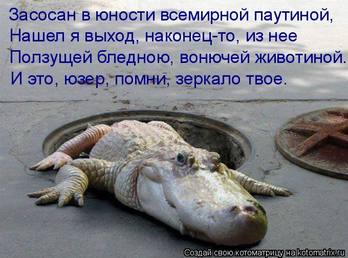 Котоматрица: Засосан в юности всемирной паутиной, Нашел я выход, наконец-то, из нее Ползущей бледною, вонючей животиной. И это, юзер, помни, зеркало твое.