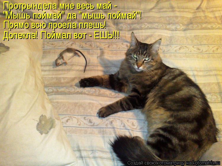 """Котоматрица: Протрындела мне весь май - """"Мышь поймай"""" да """"мышь поймай""""! Прямо всю проела плешь! Допекла! Поймал вот - ЕШЬ!!!"""