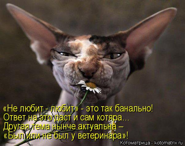 Котоматрица: «Не любит - любит» - это так банально! Ответ на это даст и сам котяра… Другая тема нынче актуальна –  «Был или не был у ветеринара»!