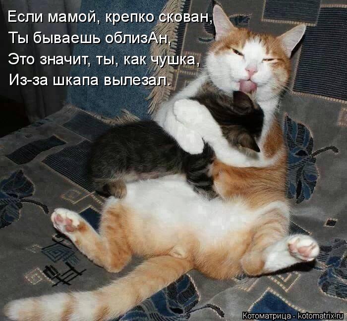 Котоматрица: Если мамой, крепко скован,  Ты бываешь облизАн, Это значит, ты, как чушка, Из-за шкапа вылезал.