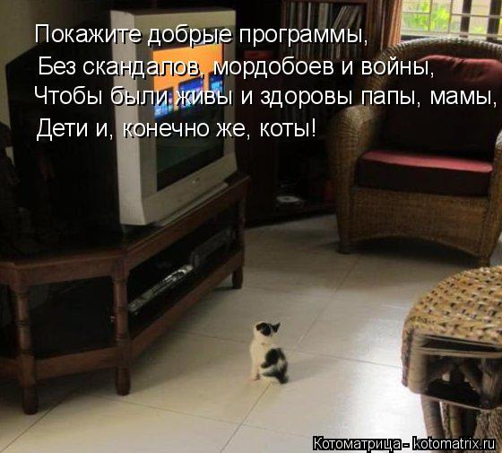 Котоматрица: Покажите добрые программы, Без скандалов, мордобоев и войны, Чтобы были живы и здоровы папы, мамы, Дети и, конечно же, коты!
