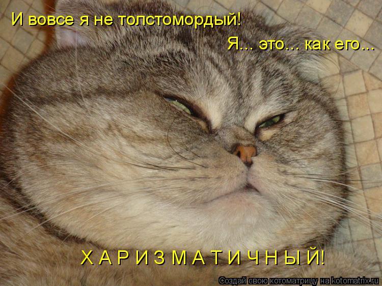 Котоматрица: И вовсе я не толстомордый! Я... это... как его...   Х А Р И З М А Т И Ч Н Ы Й!