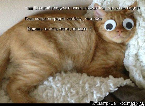 Котоматрица: Наш Василий придумал показать хозяйке , что он её видит! Ведь когда он крадет колбасу , она орет Видишь ты хоть меня , негодяй  ?