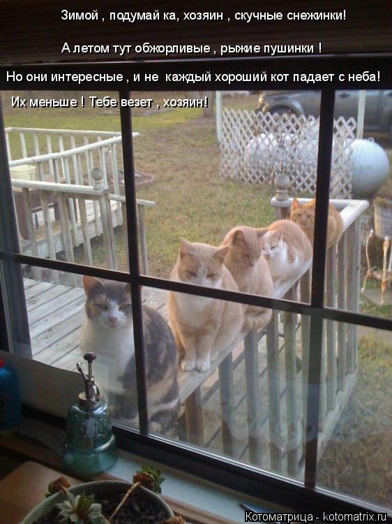 Котоматрица: Зимой , подумай ка, хозяин , скучные снежинки! А летом тут обжорливые , рыжие пушинки ! Но они интересные , и не  каждый хороший кот падает с неб