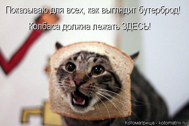 Котоматрица: Показываю для всех, как выглядит бутерброд! Колбаса должна лежать ЗДЕСЬ!