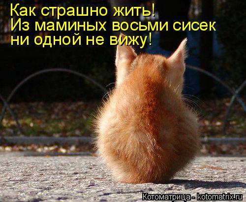 Котоматрица: Как страшно жить! Из маминых восьми сисек ни одной не вижу!