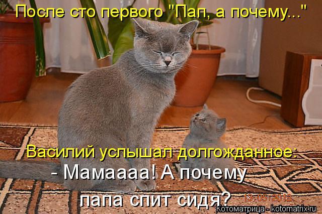 """Котоматрица: После сто первого """"Пап, а почему..."""" Василий услышал долгожданное: - Мамаааа! А почему папа спит сидя?"""