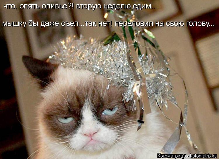 Котоматрица: мышку бы даже съел...так нет! переловил на свою голову... что, опять оливье?! вторую неделю едим...
