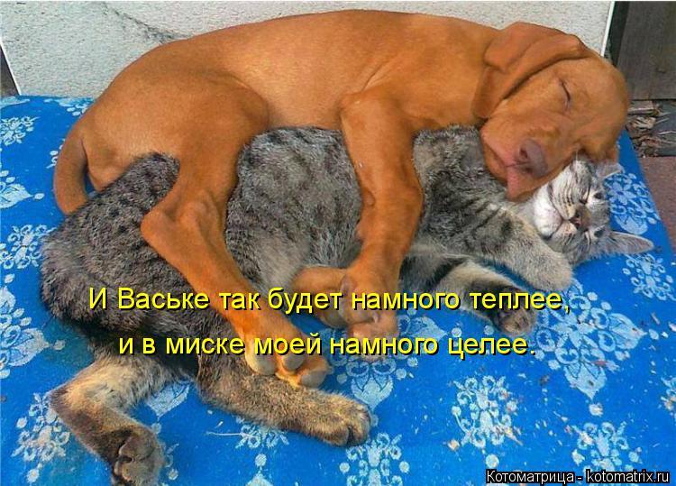 Котоматрица: И Ваське так будет намного теплее, и в миске моей намного целее.