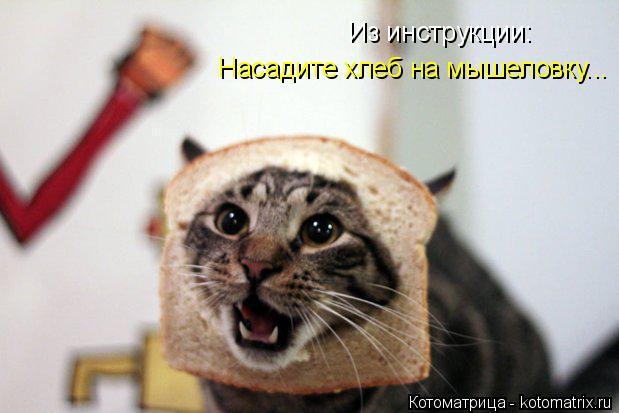 Котоматрица: Из инструкции: Насадите хлеб на мышеловку...
