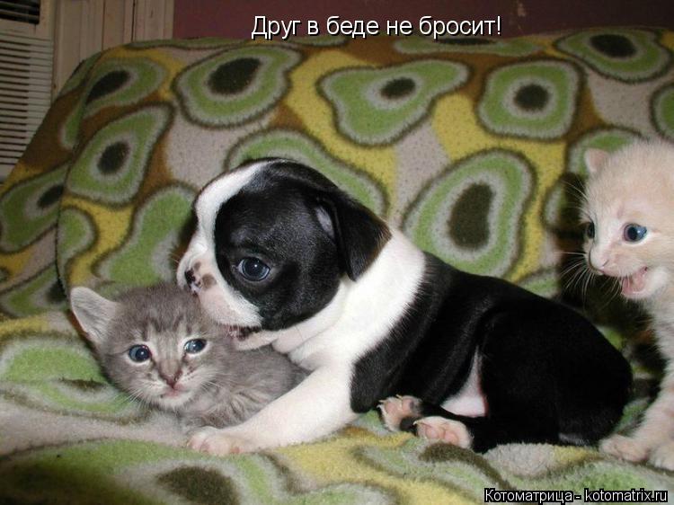 Котоматрица: Друг в беде не бросит!