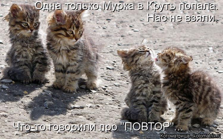 """Котоматрица: Одна только Мурка в Круть попала.  Нас не взяли.  Что-то говорили про """"ПОВТОР""""..."""