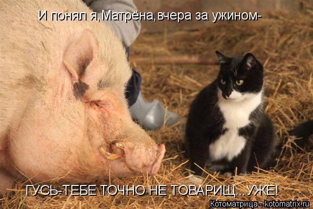 Котоматрица: И понял я,Матрёна,вчера за ужином- ГУСЬ-ТЕБЕ ТОЧНО НЕ ТОВАРИЩ...УЖЕ!