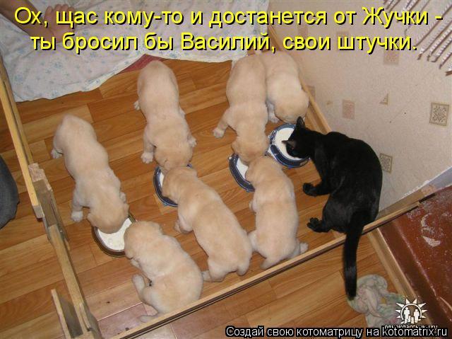 Котоматрица: Ох, щас кому-то и достанется от Жучки -  ты бросил бы Василий, свои штучки.