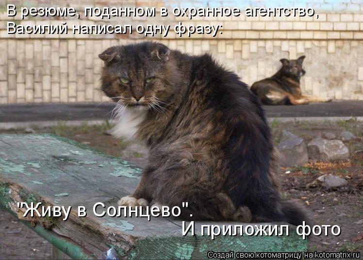 """Котоматрица: В резюме, поданном в охранное агентство, Василий написал одну фразу:  """"Живу в Солнцево"""".  И приложил фото"""