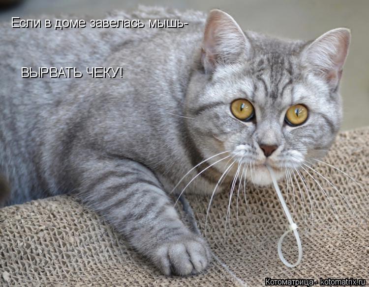 Котоматрица: Если в доме завелась мышь- ВЫРВАТЬ ЧЕКУ!
