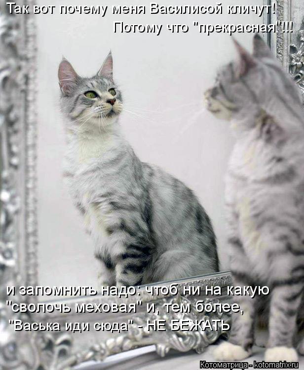 """Котоматрица: Так вот почему меня Василисой кличут! Потому что """"прекрасная""""!!! и запомнить надо: чтоб ни на какую  """"сволочь меховая"""" и, тем более, """"Васька иди"""