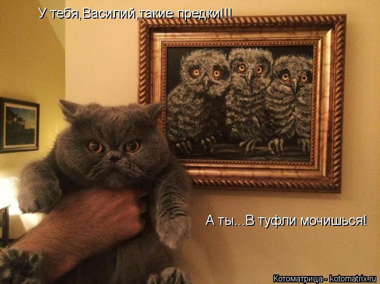 Котоматрица: У тебя,Василий,такие предки!!!  А ты...В туфли мочишься!