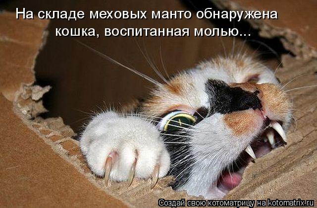 Котоматрица: На складе меховых манто обнаружена кошка, воспитанная молью...