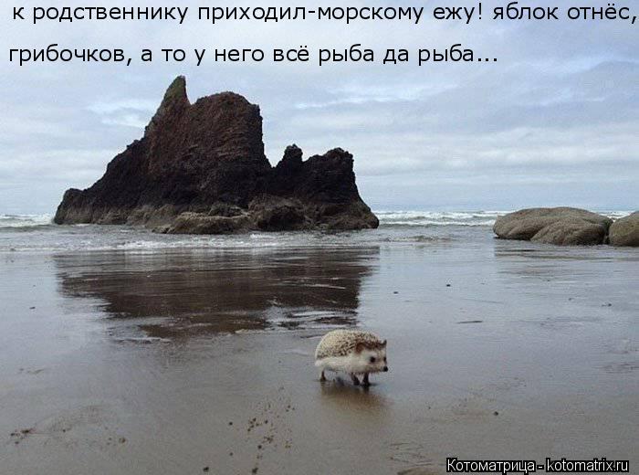 Котоматрица: грибочков, а то у него всё рыба да рыба... к родственнику приходил-морскому ежу! яблок отнёс,