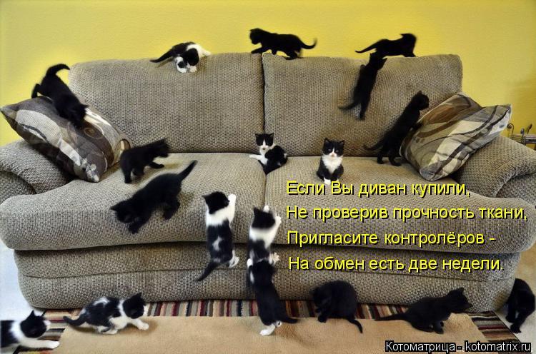 Котоматрица: Не проверив прочность ткани, Если Вы диван купили, Пригласите контролёров - На обмен есть две недели.