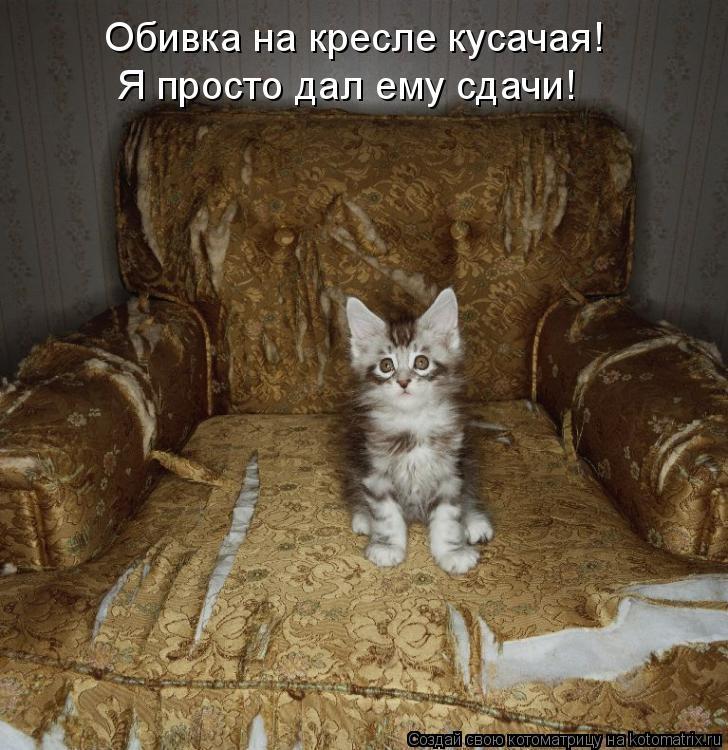 Котоматрица: Обивка на кресле кусачая! Я просто дал ему сдачи!
