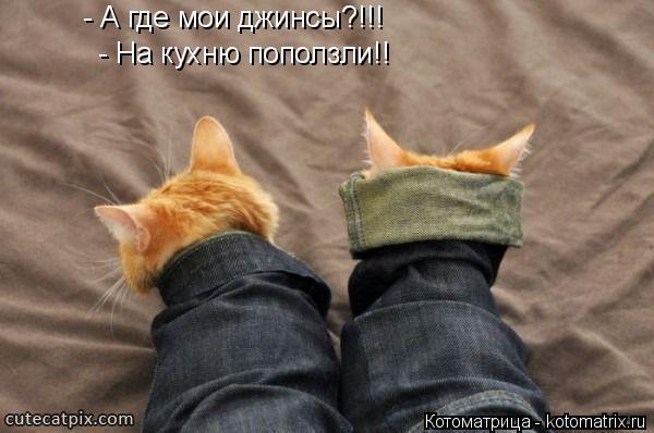 Котоматрица: - А где мои джинсы?!!! - На кухню поползли!!