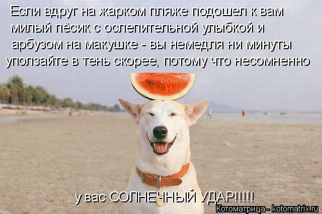 Котоматрица: Если вдруг на жарком пляже подошел к вам  милый пёсик с ослепительной улыбкой и арбузом на макушке - вы немедля ни минуты уползайте в тень ск