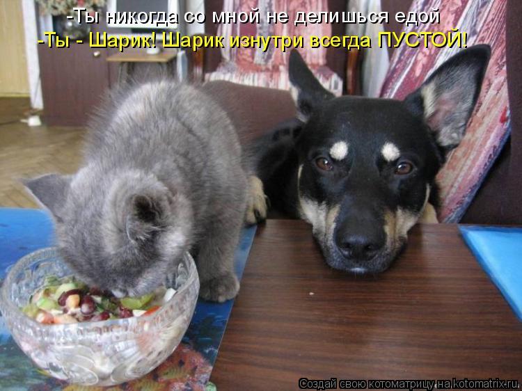 Котоматрица: -Ты никогда со мной не делишься едой -Ты - Шарик! Шарик изнутри всегда ПУСТОЙ!