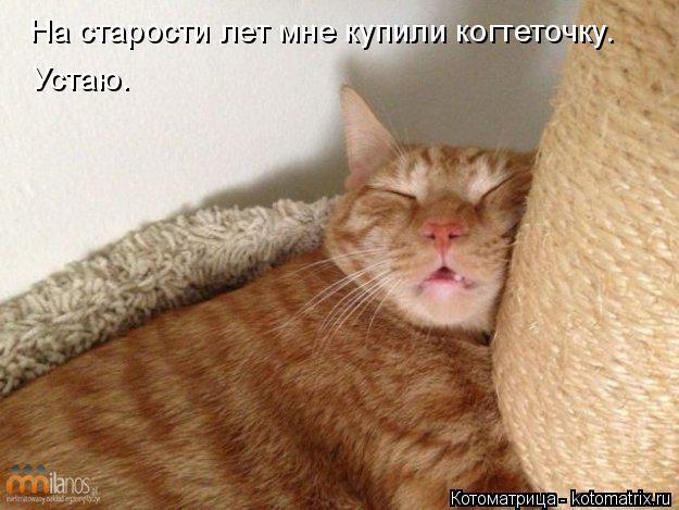 Котоматрица: На старости лет мне купили когтеточку. Устаю.