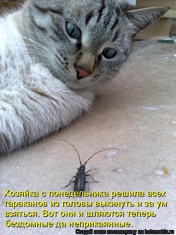 Котоматрица: Хозяйка с понедельника решила всех тараканов из головы выкинуть и за ум взяться. Вот они и шляются теперь  бездомные да неприкаянные.